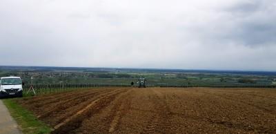 Plantation et complantation: du pépiniériste à la parcelle